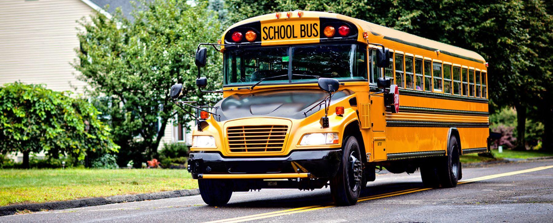 autobuses escolares americano