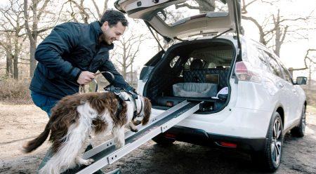 Otra razón clamorosa para no abandonar a las mascotas en el coche