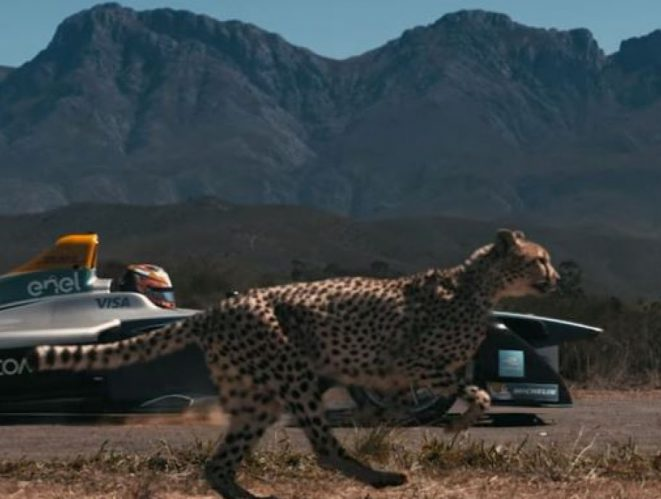Fórmula E contra guepardo