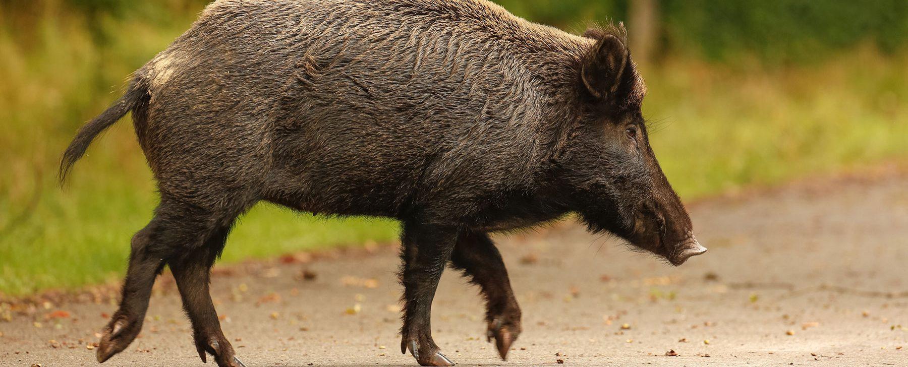 ¿En qué provincia es más probable chocar contra un animal?
