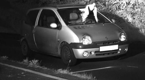 Una paloma libra a un conductor de una multa por exceso de velocidad